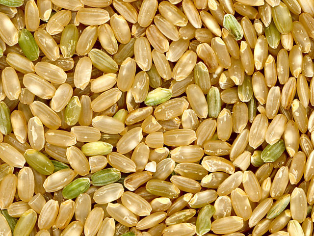 Bulk Organic Brown Rice  Wholesale Bulk Grains Beans Seeds Flour Meal Baking Needs