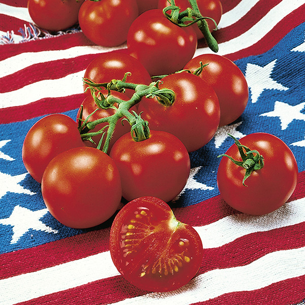 Fourth Of July Tomato  Space Savers Collection