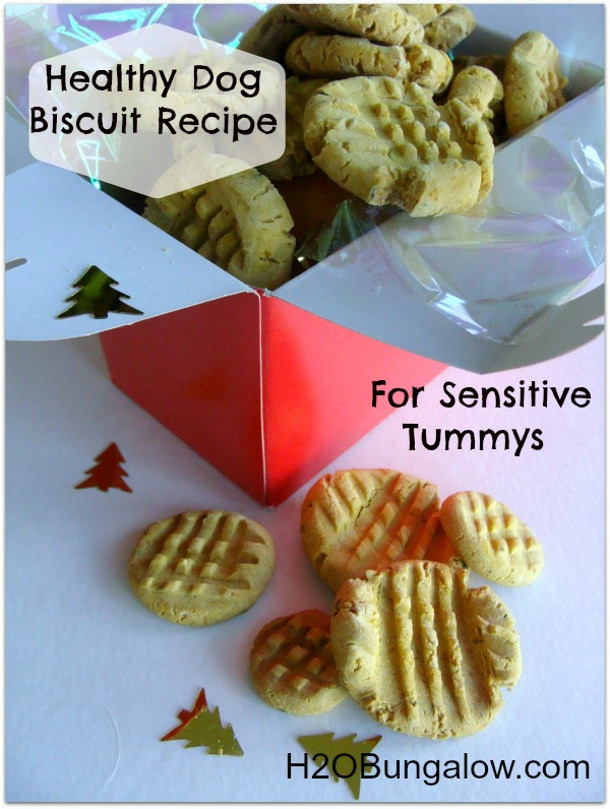 Healthy Biscuit Recipe  Homemade Dog Treat Recipes