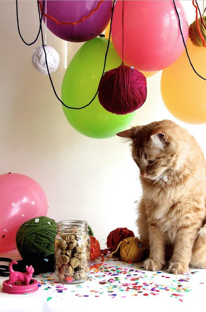 Healthy Cat Snacks  5 Healthy homemade cat treat recipes