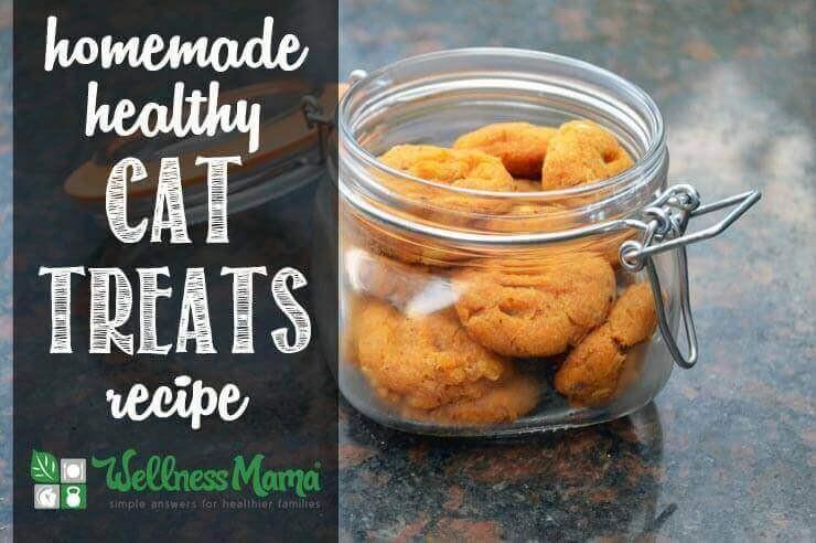 Healthy Cat Snacks  Healthy Homemade Cat Treats Recipe