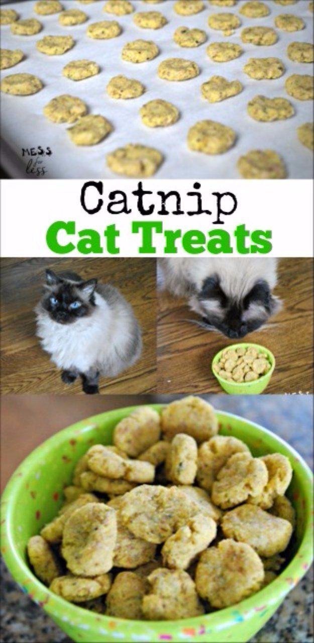 Healthy Cat Snacks  1000 ideas about Homemade Cat Trees on Pinterest