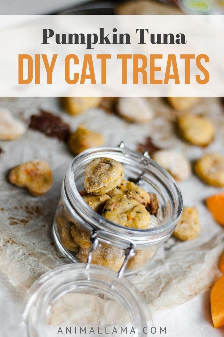 Healthy Cat Snacks  Best 25 Homemade cat food ideas on Pinterest