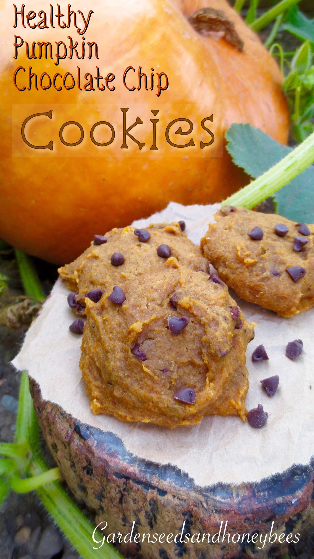 Healthy Chocolate Chip Cookies  Healthy Pumpkin Chocolate Chip Cookies Garden Seeds and
