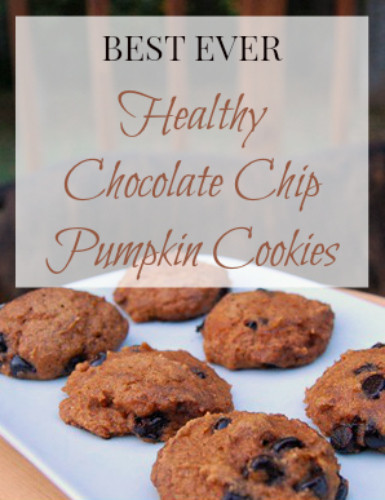 Healthy Chocolate Chip Cookies With Applesauce  Healthy Pumpkin Chocolate Chip Cookie Recipe with Applesauce