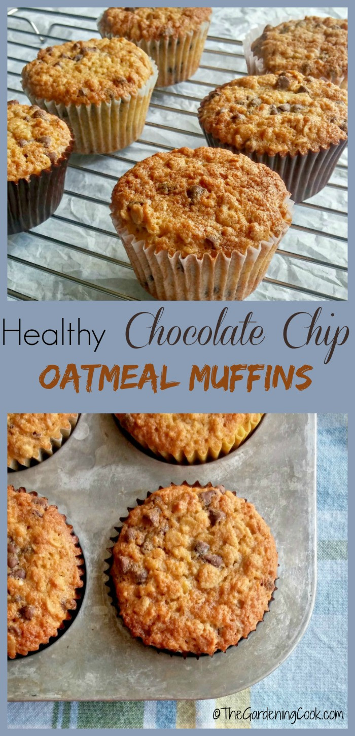 Healthy Chocolate Muffins Oatmeal  Chocolate Chip Oatmeal Muffins The Gardening Cook