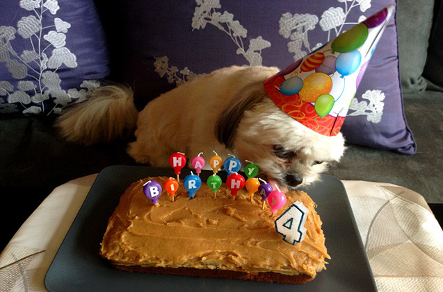 Healthy Dog Birthday Cake Recipes  Party Down Dog Birthday Cake Recipe