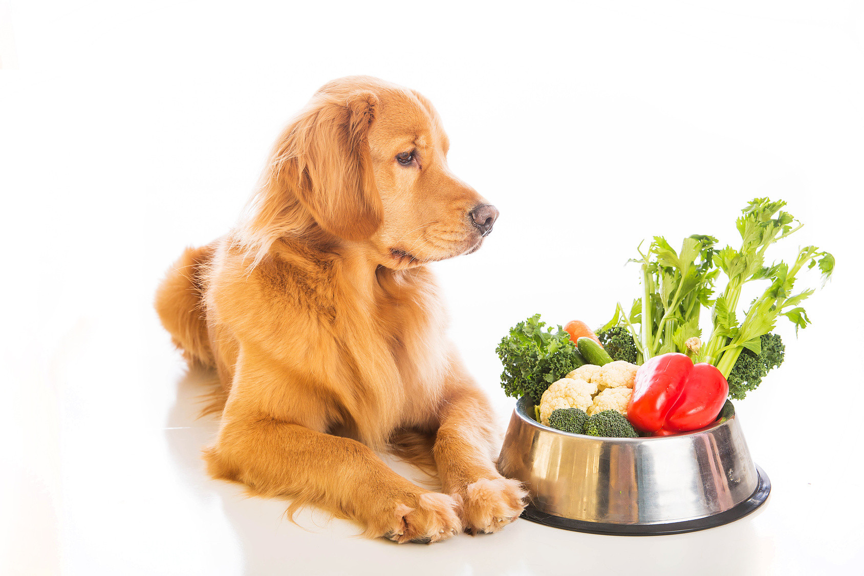 Healthy Dog Snacks  Healthy Snacks You Can Make For Your Pet