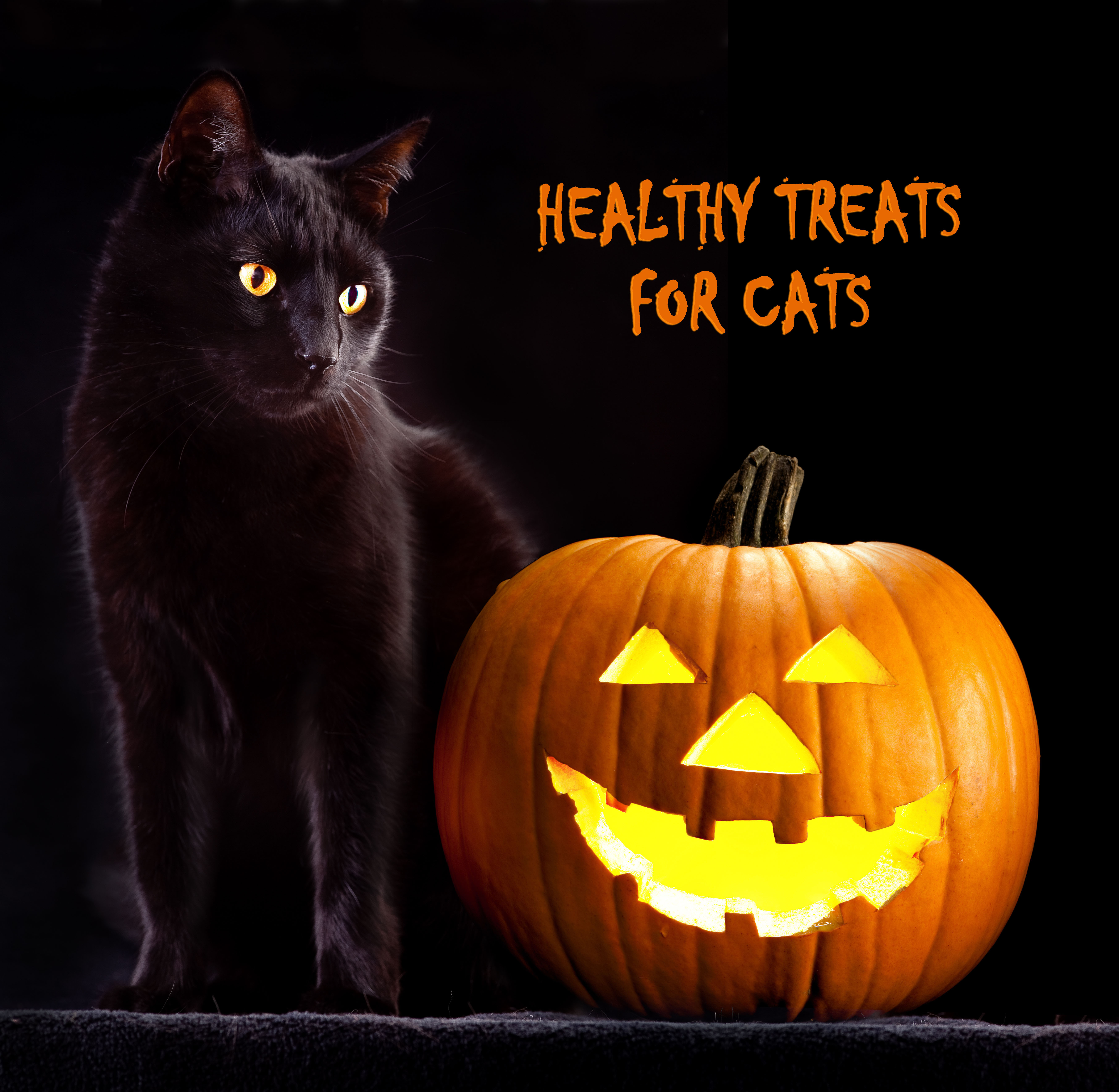 Healthy Snacks For Cats  Healthy Treats to Give Your Pets on Halloween Allivet