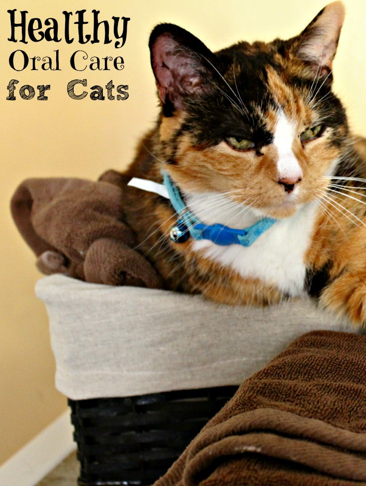 Healthy Snacks For Cats  Oral Care for Cats