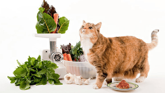 Healthy Snacks For Cats  7 Best Healthy Cat Food Updated 2018