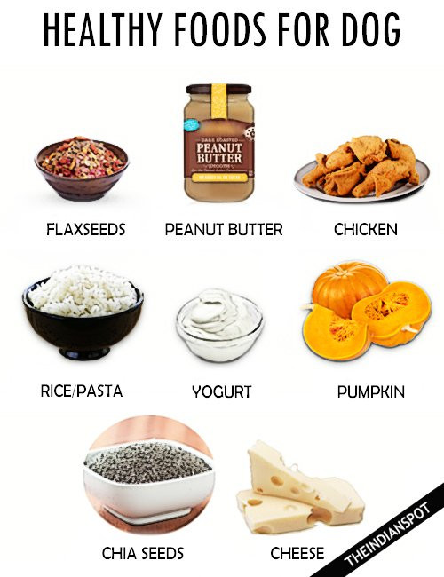 Healthy Snacks For Dogs  Healthy Food For Dogs