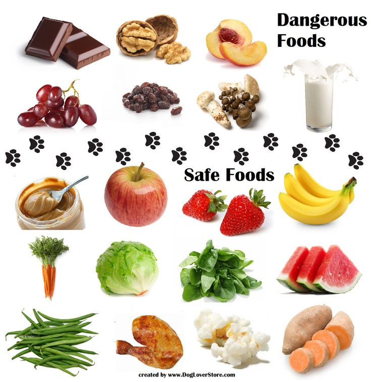 Healthy Snacks For Dogs  Dangerous Food for Dogs & Safe Food for Dogs