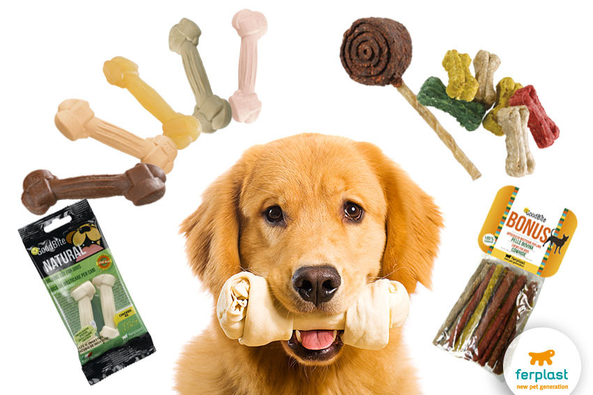 Healthy Snacks For Puppies  Canine education when to reward a dog LOVE FERPLAST