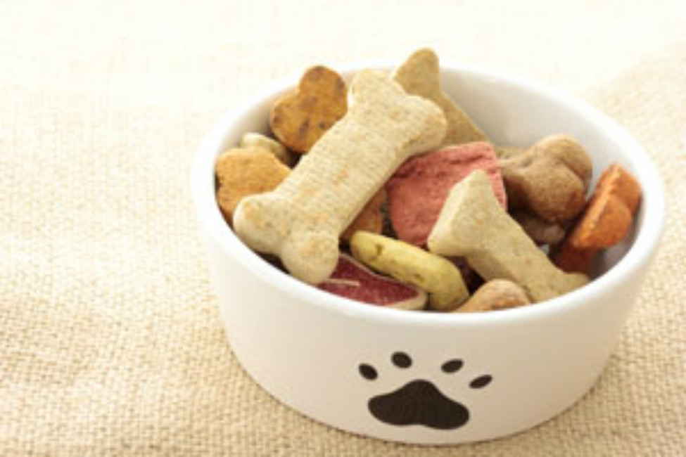 Healthy Snacks For Puppies  Healthy and Yummy Dog Treats to Make