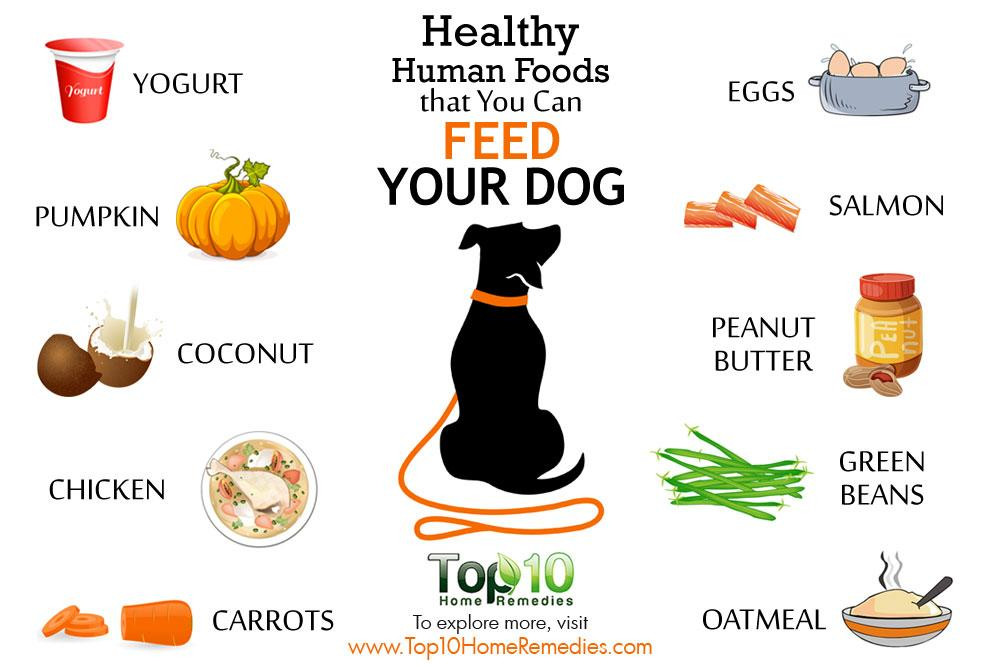 Healthy Snacks For Puppies  10 Healthy Human Foods that You Can Feed Your Dog