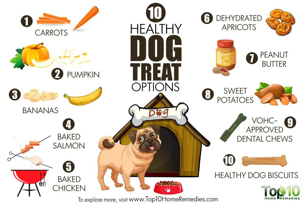 Healthy Snacks For Puppies  10 Healthy Dog Treat Options