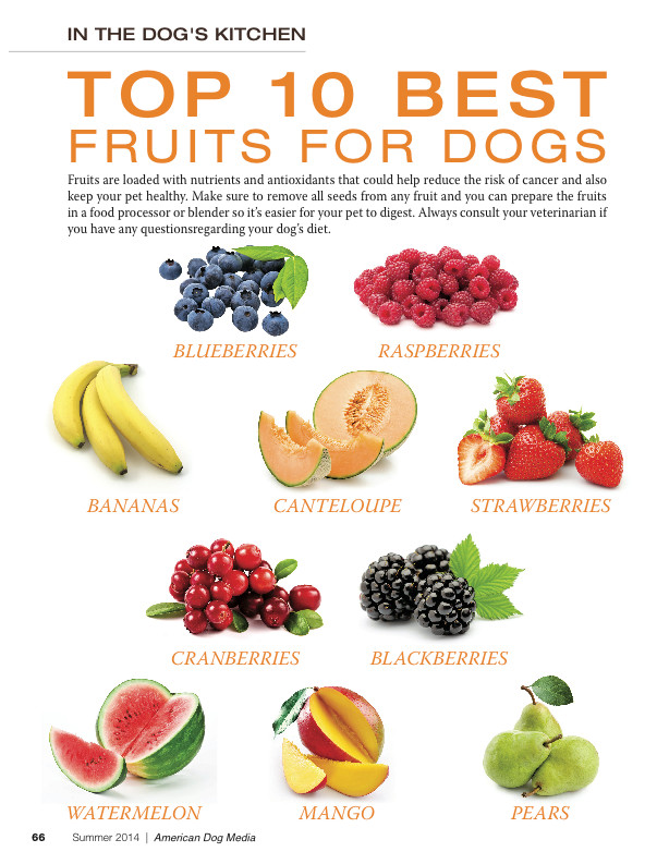 Healthy Snacks For Puppies  TOP 10 BEST VEGETABLES FOR MY DOG