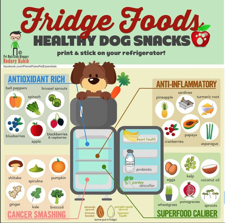 Healthy Snacks For Puppies  Healthy Dog Snacks