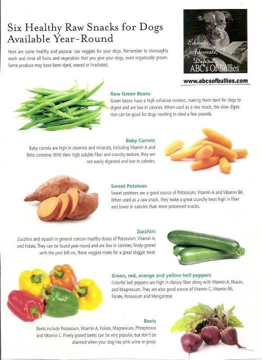 Healthy Snacks For Puppies  134 best Great dane mama images on Pinterest