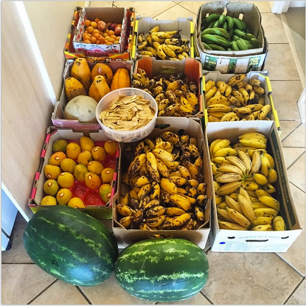 Healthy Snacks Reddit  Eat ly Bananas Why a Mono Diet is Bogus for Weight Loss