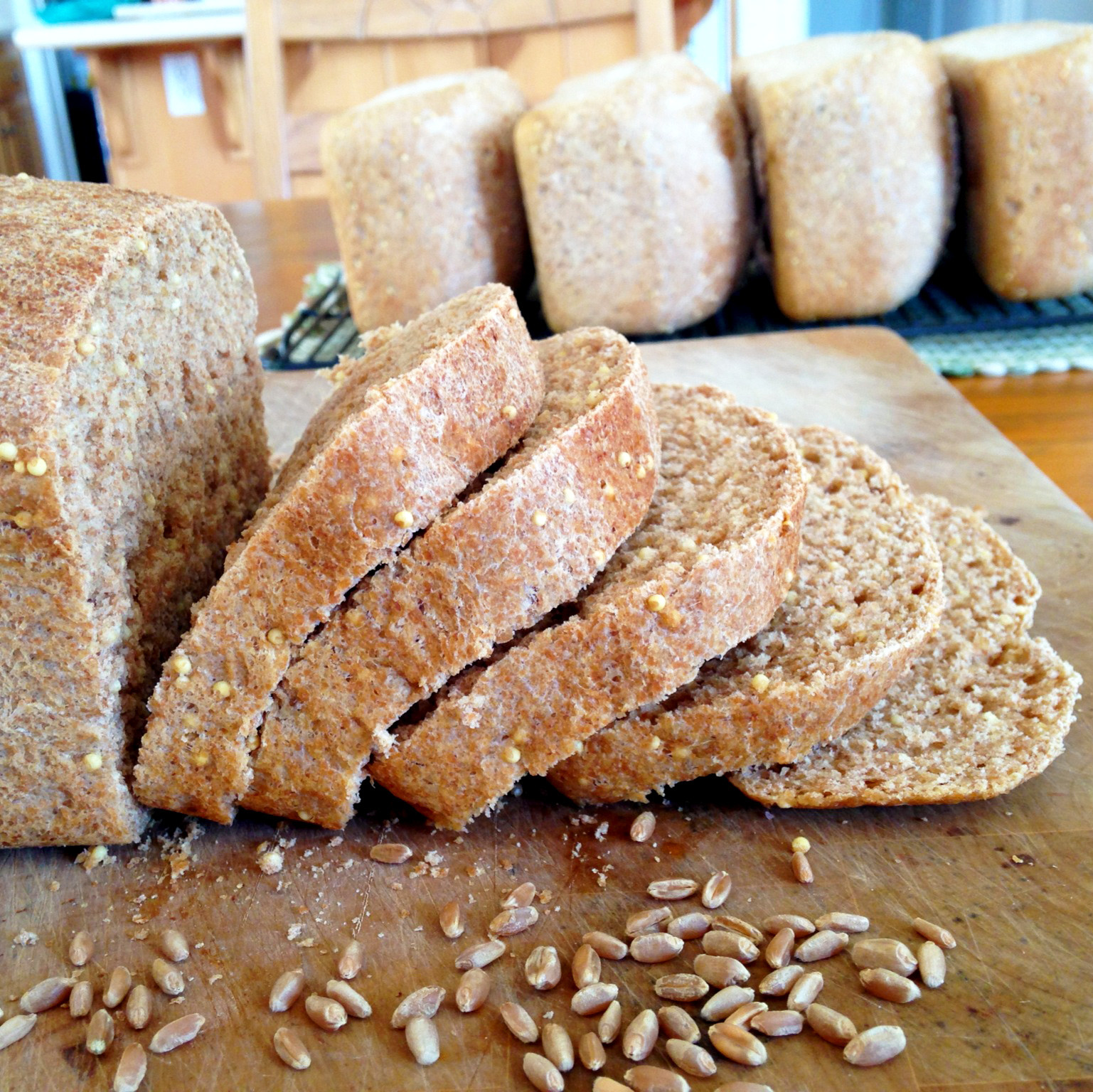 Healthy Wheat Bread  Live Right Be Healthy Homemade Whole Wheat Bread