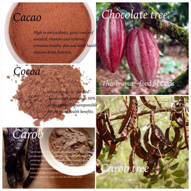 Is Cocoa Powder Healthy  16 best images about algarroba on Pinterest