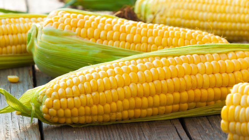 Is Corn Kosher For Passover  Is corn kosher for Passover Here s what you need to know