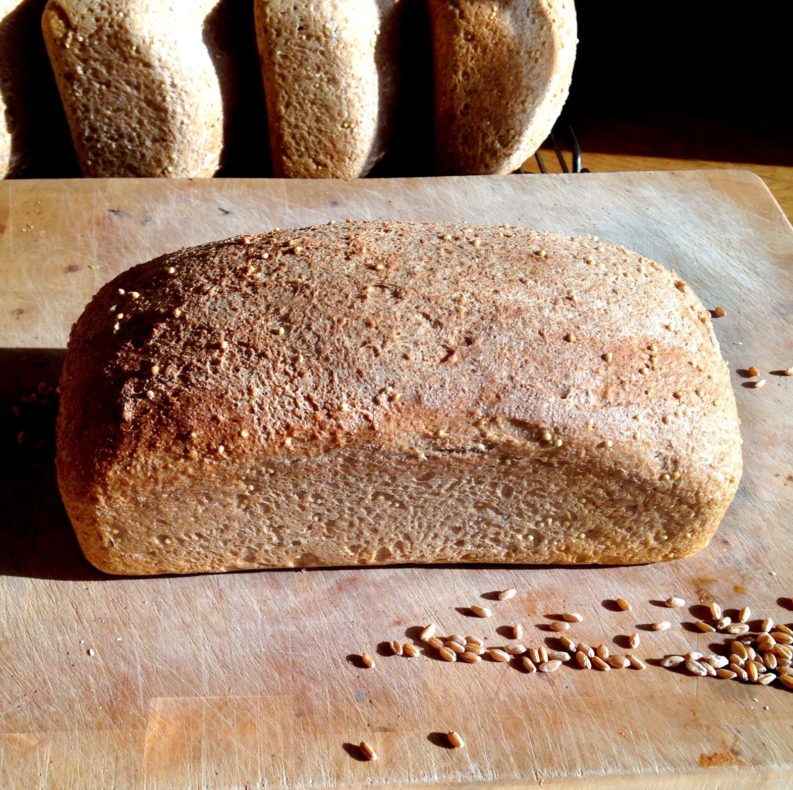 Is Wheat Bread Healthy  Live Right Be Healthy Homemade Whole Wheat Bread