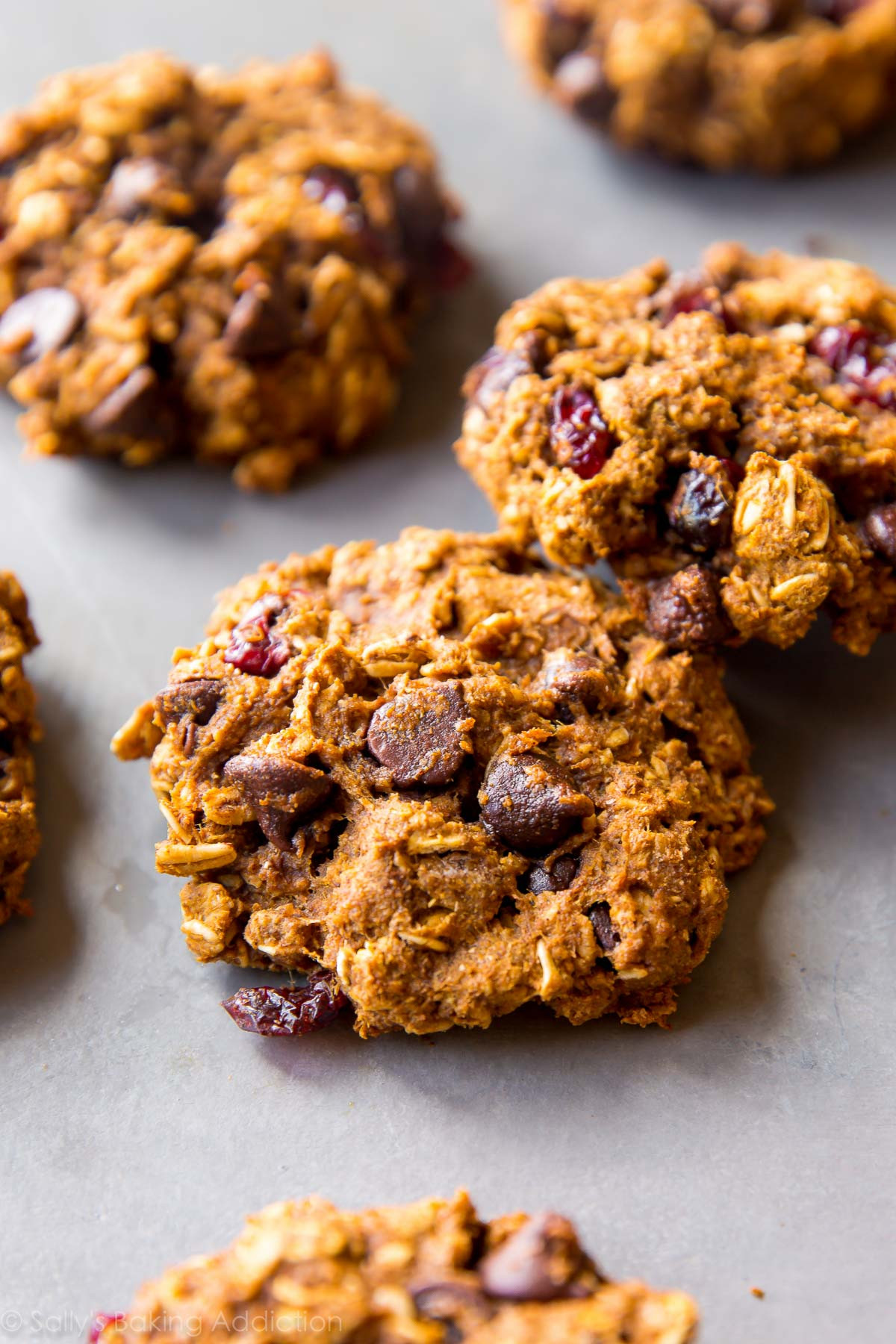 Oat Chocolate Chip Cookies Healthy  Healthy Pumpkin Chocolate Chip Oatmeal Cookies Sallys