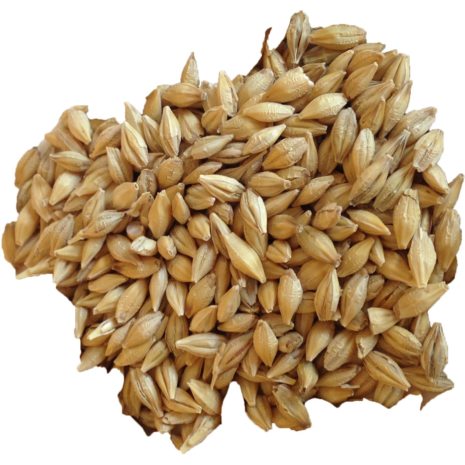 Organic Barley Seed  Barley Organic Sprouting Barley BuildASoil
