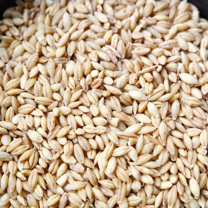 Organic Barley Seed  Other Grains Adaptive Seeds