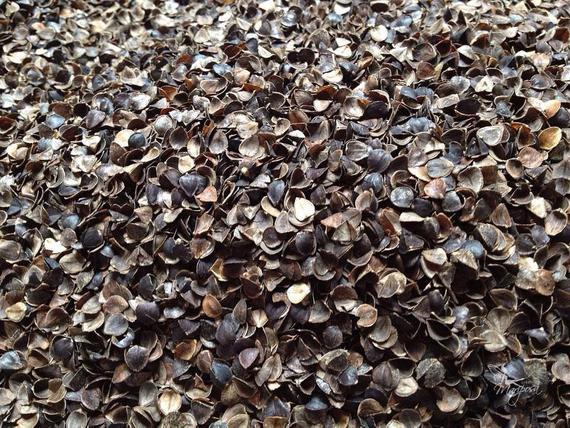 Organic Buckwheat Hulls  Organic buckwheat hulls dusted 4 kilos 8 8 lbs natural