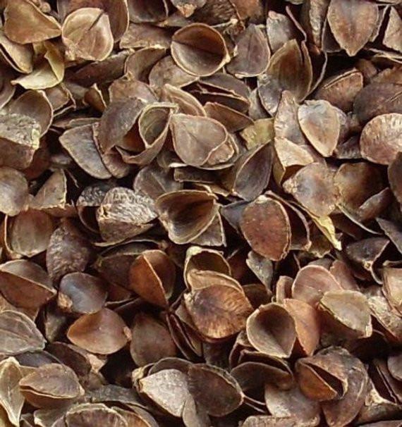 Organic Buckwheat Hulls  Organic Buckwheat Hulls 5 LB Bulk Order by lilyNsparrow on