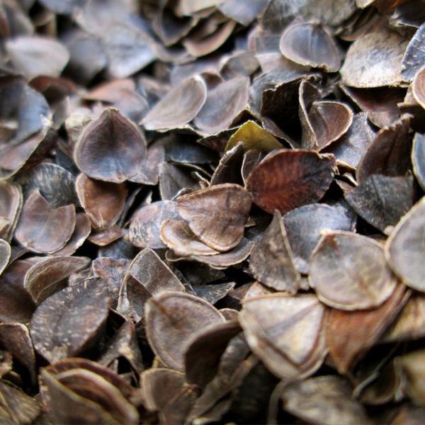 Organic Buckwheat Hulls  Bulk Organic Buckwheat Hulls – Open Your Eyes Bedding