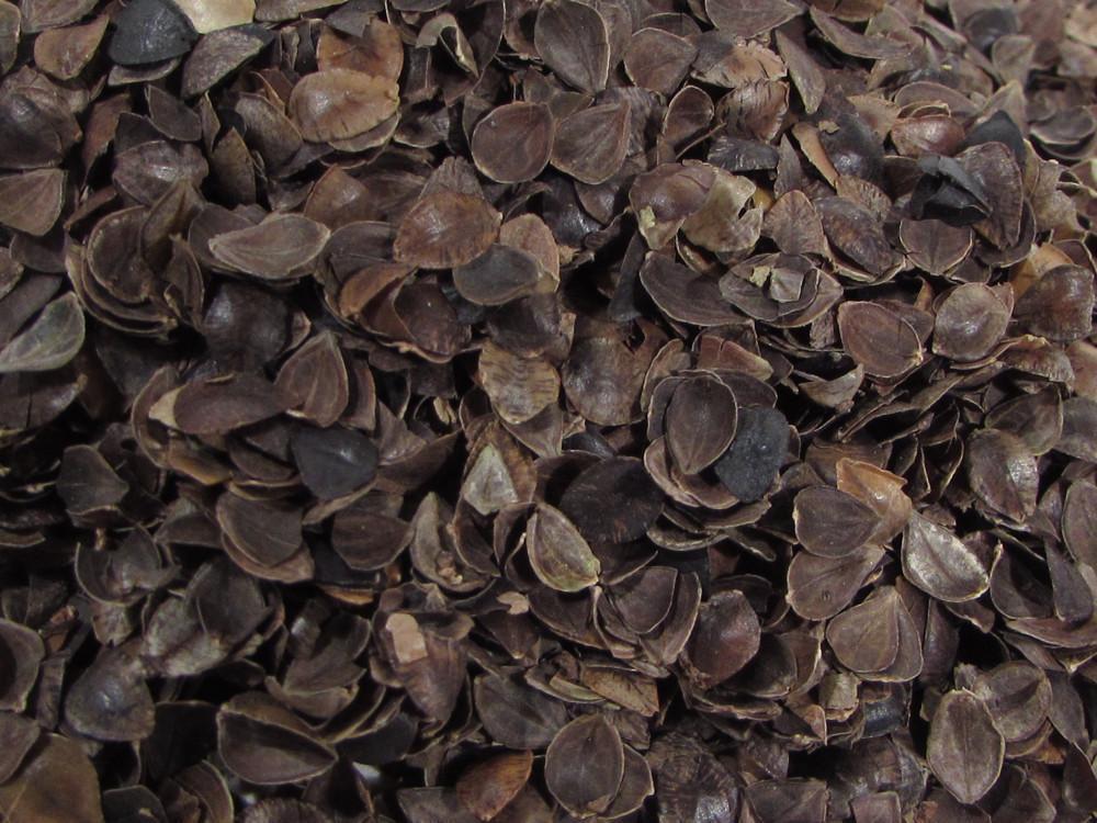 Organic Buckwheat Hulls  Organic Buckwheat Hulls Brown Color & Organic Cotton Plus