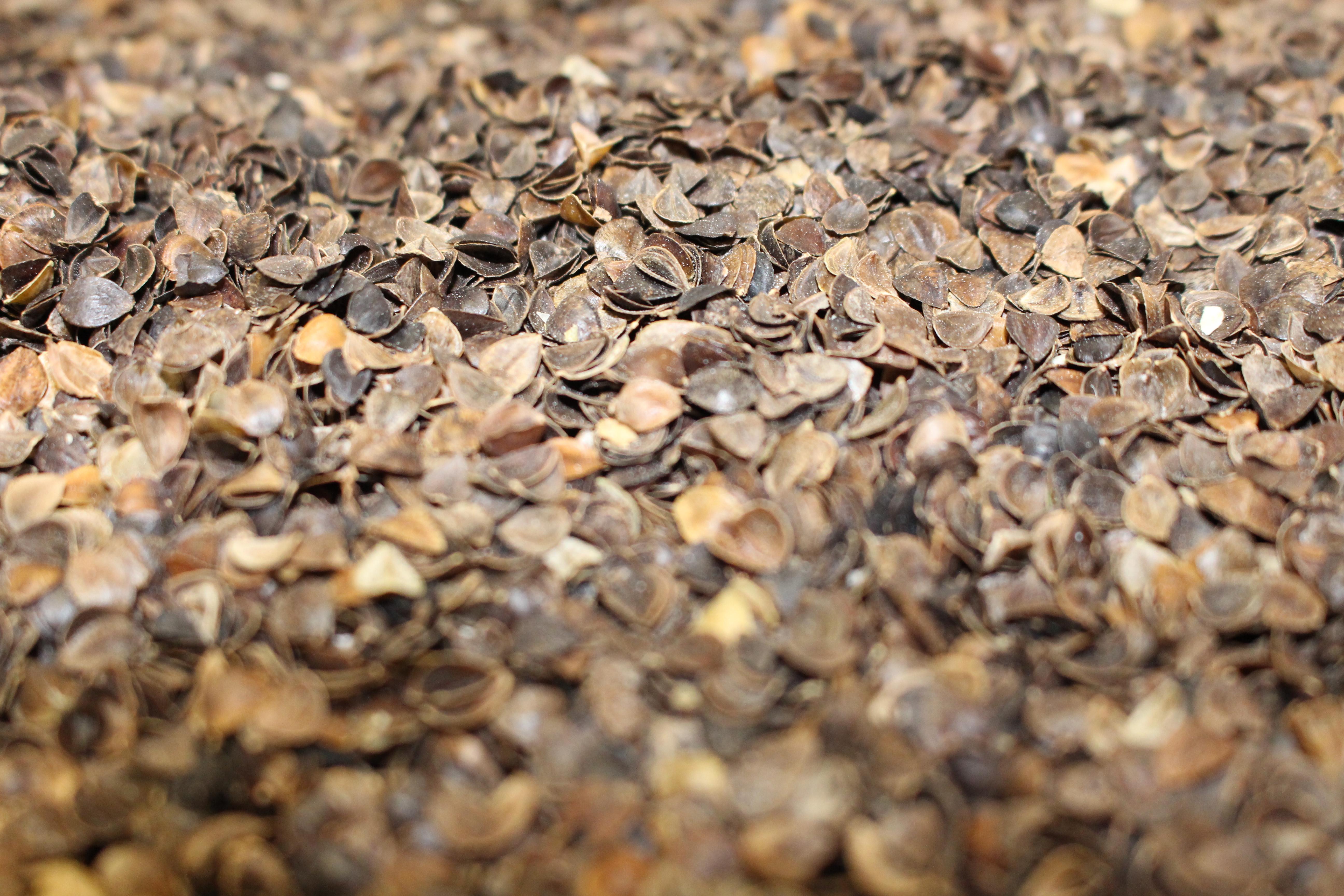 Organic Buckwheat Hulls  Organic Buckwheat Pillows – Bliss Sleep Center