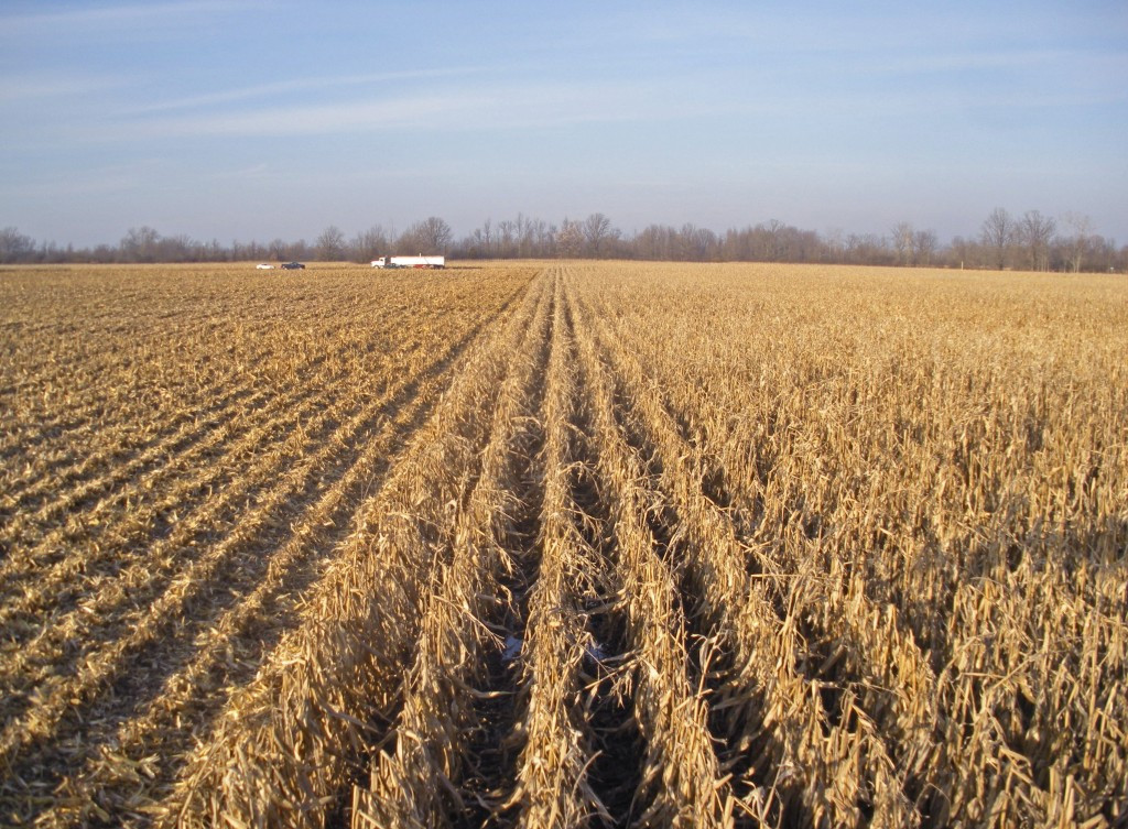 Organic Oats And Soybeans  Corn Yield Under Conventional and Organic Cropping Systems