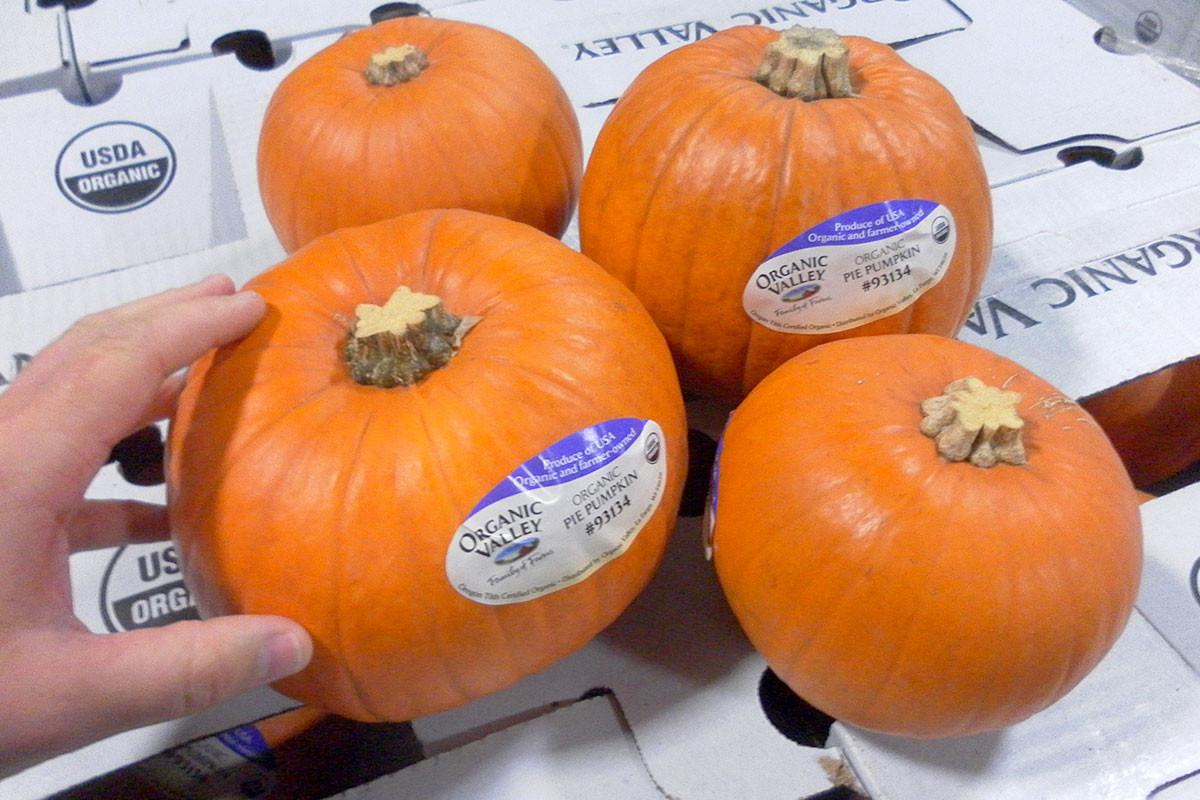 Organic Pumpkin Pie  Organic Pie Pumpkins