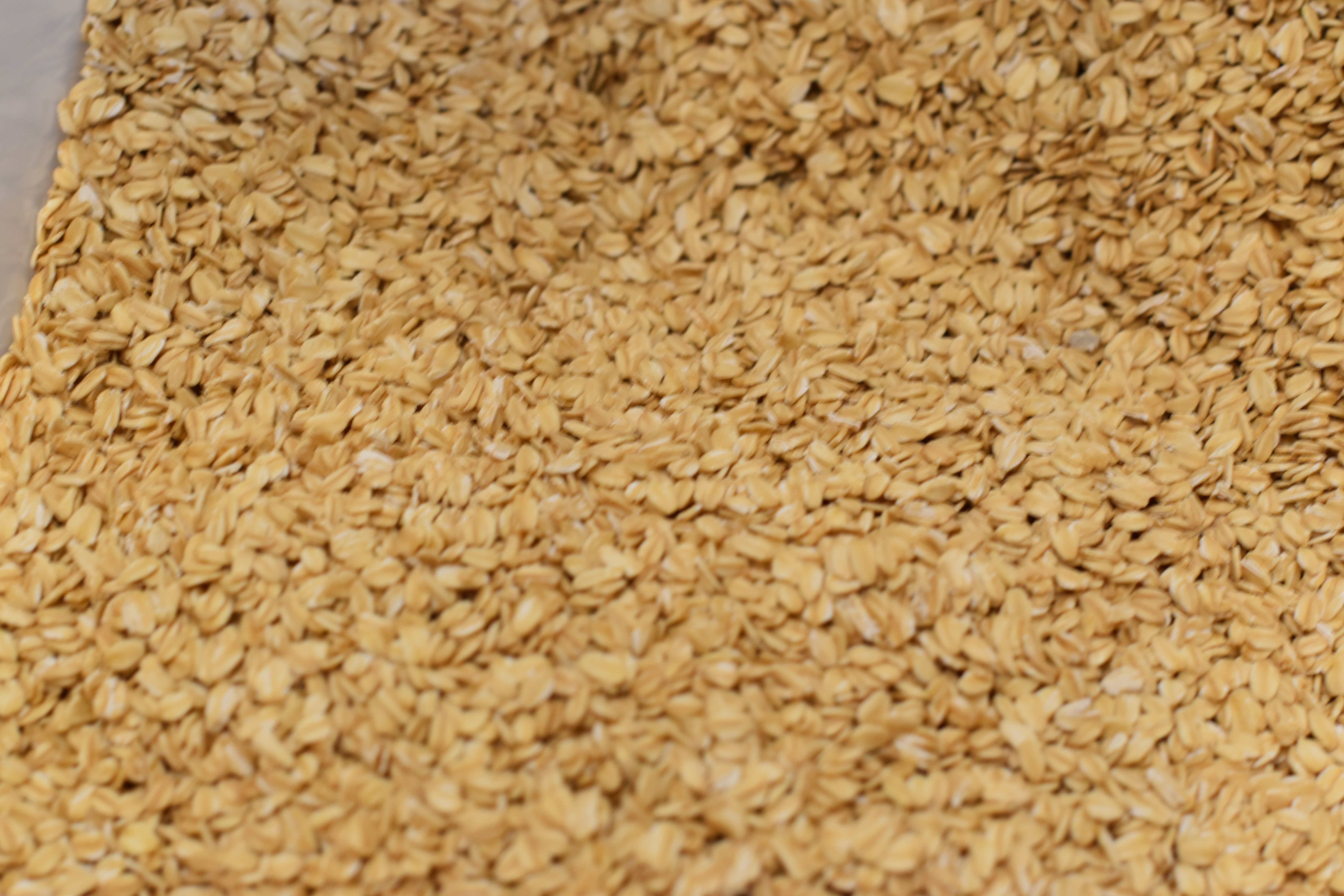Organic Rolled Oats Bulk  Organic Rolled Oats Stabilized