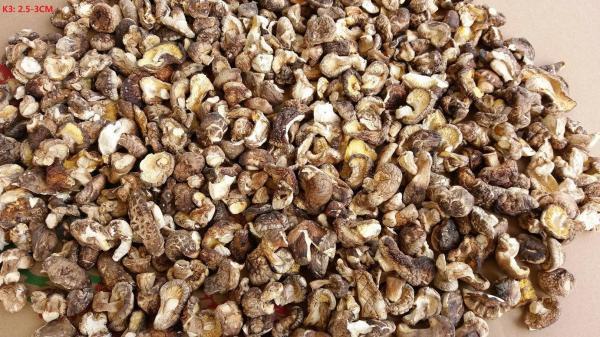Organic Shiitake Mushrooms  Cheap Organic shiitake mushroom whole Dried Shiitake
