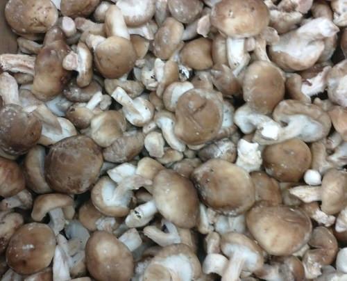 Organic Shiitake Mushrooms  Organic Baby Shiitake Mushrooms