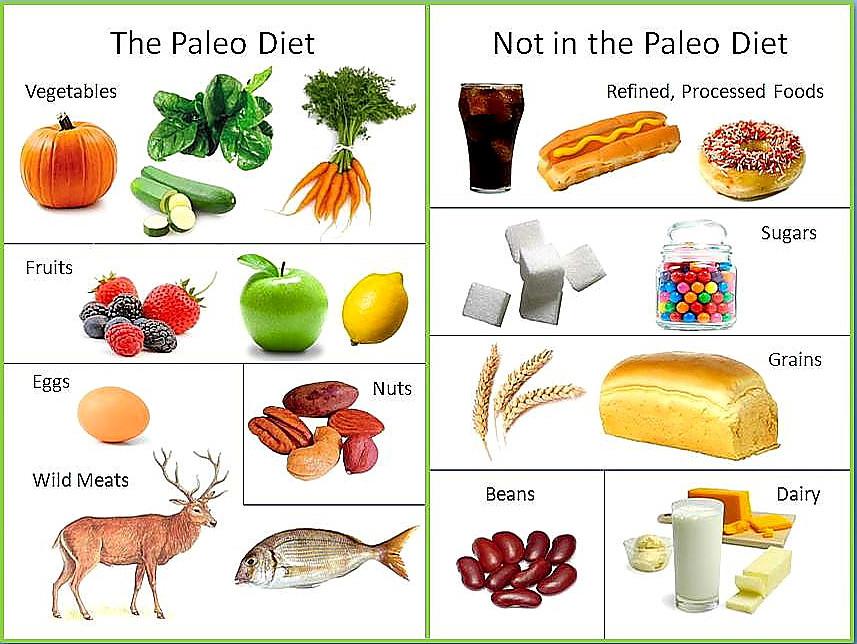 Paleo Diet Unhealthy  The Paleo Diet