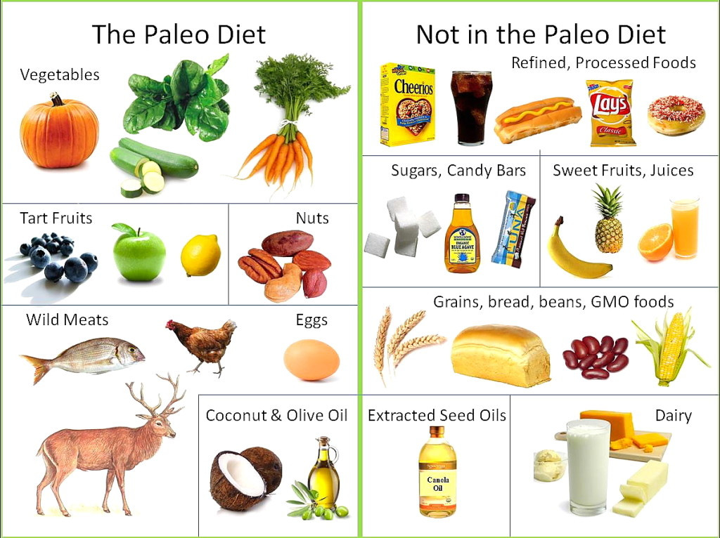 Paleo Diet Unhealthy  Popular Effective Diets for Sleep Apnea CPAP Therapy