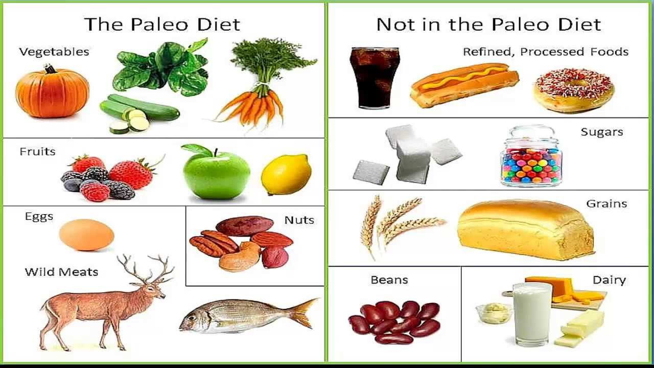 Paleo Diet Unhealthy  Paleo Diet what is it should you try it Level 9 Fitness