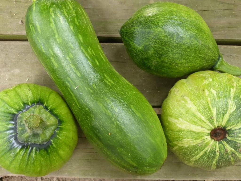 Summer Squash Varieties  An Alternative to Summer Squash Harvest Winter Squash