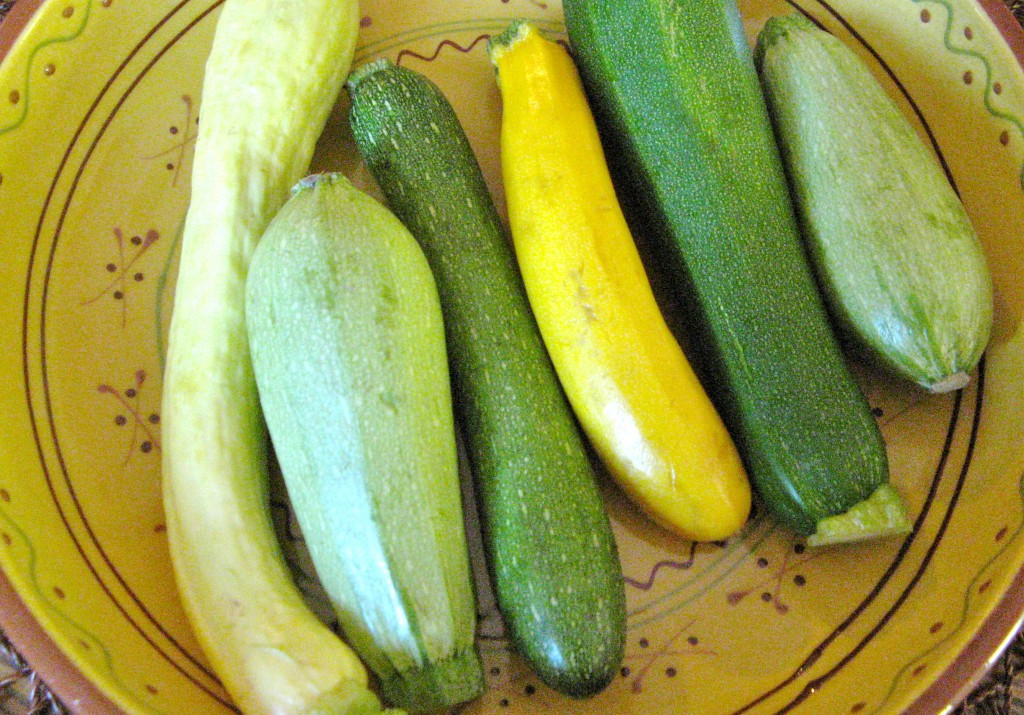 Summer Squash Varieties  Summer squash varieties