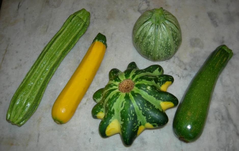 Summer Squash Varieties  summer picfind3 Bloguez