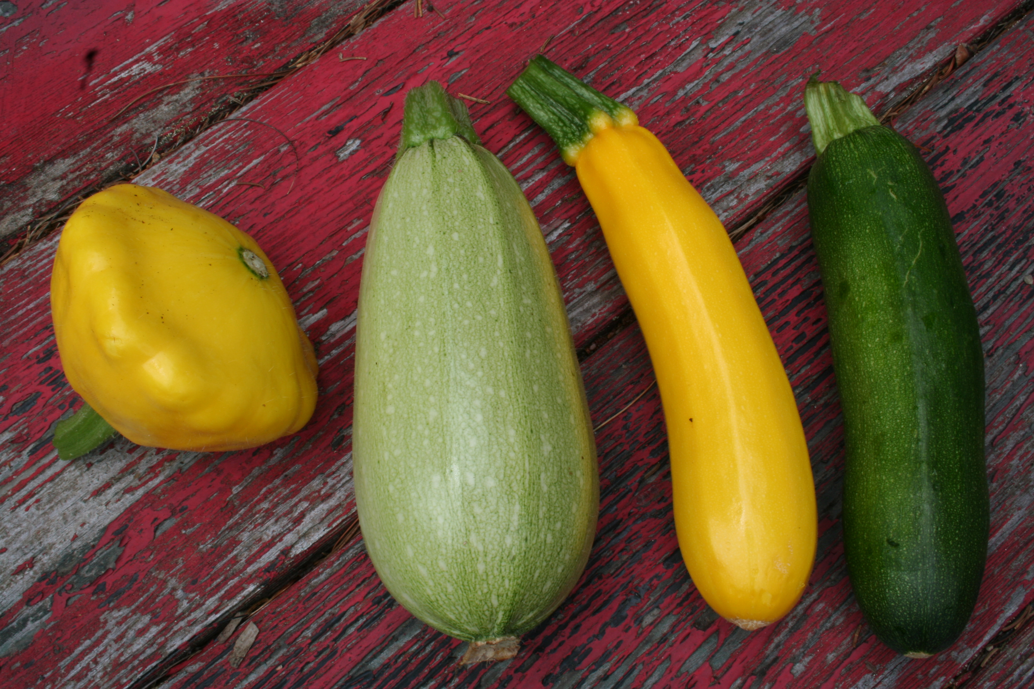 Summer Squash Varieties  The Ve able Garden in August – Gardening in Tune with