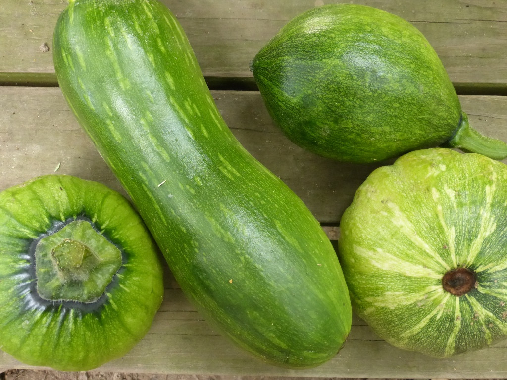 Types Of Summer Squash  An Alternative to Summer Squash Harvest Winter Squash